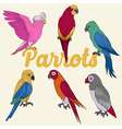 exotic parrots hand drawn vector image vector image