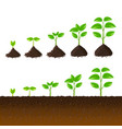 growing plant steps set vector image vector image