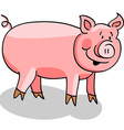 Pig cartoon on white vector image vector image