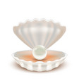 realistic detailed 3d shell with pearl vector image