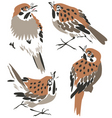 sparrow or thrush vector image vector image
