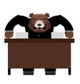 Angry Boss bear scolds Wicked head yelling at vector image vector image