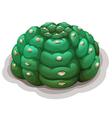 Astrophytum asterias kikko vector image vector image