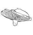 hand drawn of a mushrooms vector image