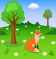 red fox on forest meadow vector image vector image