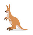 kangaroo with joey baby in pouch isolated on white vector image