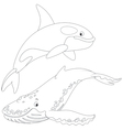 killer whale and hunchbacked whale vector image vector image
