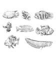 sea and ocean types fish hand drawn set vector image vector image