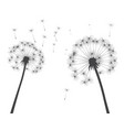 shape dandelion outline vector image