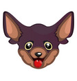 silly chihuahua on white background vector image