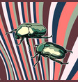 card with scarab beetles vector image