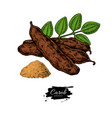 carob superfood drawing isolated hand vector image vector image