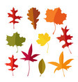 colorful set of autumn lmaple oak and liquidambar vector image