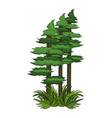 forest trees cartoon vector image vector image