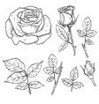 hand drawn elegant rose flowers vector image vector image