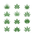 stylized hemp leaves vector image vector image