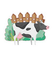 cow farm animal with garden and fence vector image