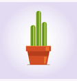 decorative cactus with prickles on the white vector image