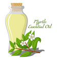 essential oil of myrtle vector image vector image