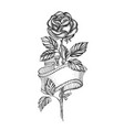 rose sketch with ribbon vector image vector image