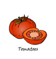 hand drawn of red tomatoes vector image