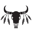 native american bull or cow skull with feathers vector image vector image