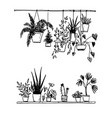 set potted house plants sketch vector image vector image