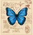 banner with drawing a butterfly morpho peleides vector image vector image