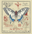 banner with drawing of a swallowtail butterfly vector image