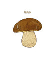 bolete mushrooms hand drawn vintage vector image