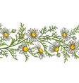 chamomile flower pattern vector image