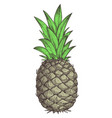 fresh pineapple hand drawn isolated icon vector image vector image