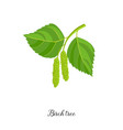 drawing branch birch tree vector image vector image