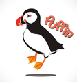 puffin bird vector image vector image