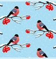 bullfinches on rowan branches vector image