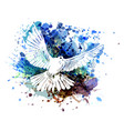color of a dove vector image vector image