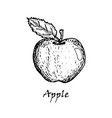 hand drawn of an apple with a leaf vector image