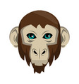 monkey wild animal vector image