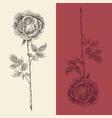 rose flower vintage engraved retro vector image