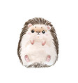adorable hedgehog whute background with cute wate vector image vector image
