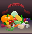 vegetables harvest vector image