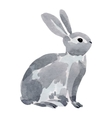 watercolor a rabbit vector image