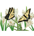 white crocus flowers vector image vector image
