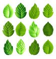 set green leaves vector image vector image
