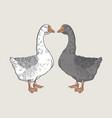 white goose grey goose goose hand drawn vector image