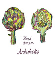 Artichoke hand drawn card set artistic design vector image