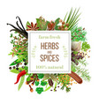 big set culinary herbs and spices under squire vector image vector image