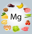 foods rich in magnesium vector image