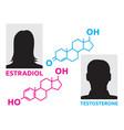 hormones concept vector image vector image