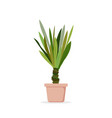 palm tree in the pot palm vector image vector image